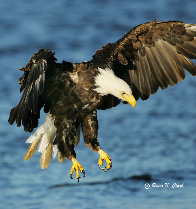 eagle.c09.11.2004.JZ3F4717.b-700.jpg